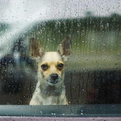 Regen muss man nicht immer nur von Drinnen erleben.